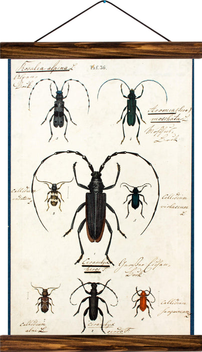 Beetles, reprint on linen - Josef und Josefine