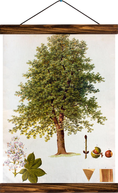Chestnut tree, reprint on linen - Josef und Josefine
