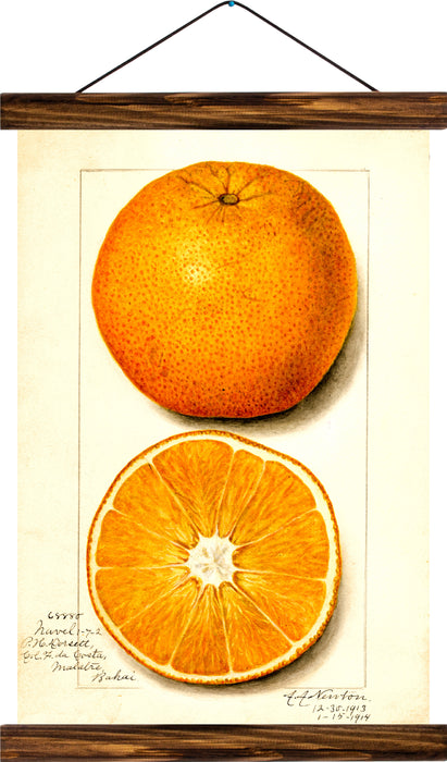 Orange, reprint on linen - Josef und Josefine