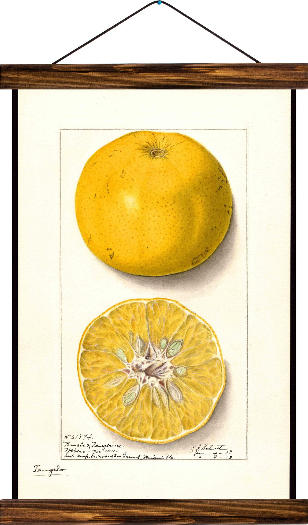 Lemon, reprint on linen