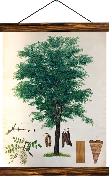 Acacia, reprint on linen - Josef und Josefine