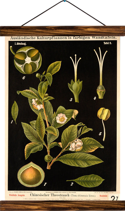 Chinese tea bush, reprint on linen - Josef und Josefine