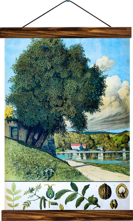 Walnut tree, reprint on linen - Josef und Josefine