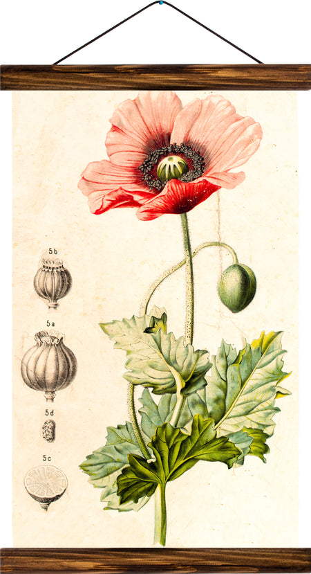 Poppy, reprint on linen - Josef und Josefine