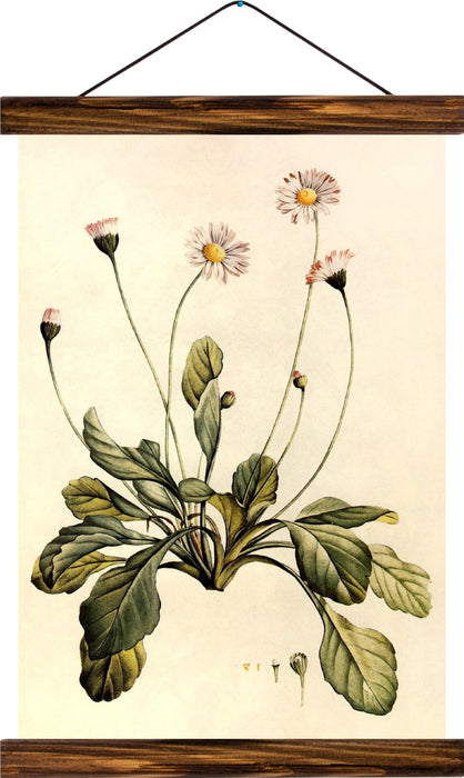 Common daisy, reprint on linen - Josef und Josefine