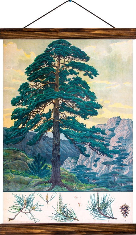 Scots pine, reprint on linen - Josef und Josefine