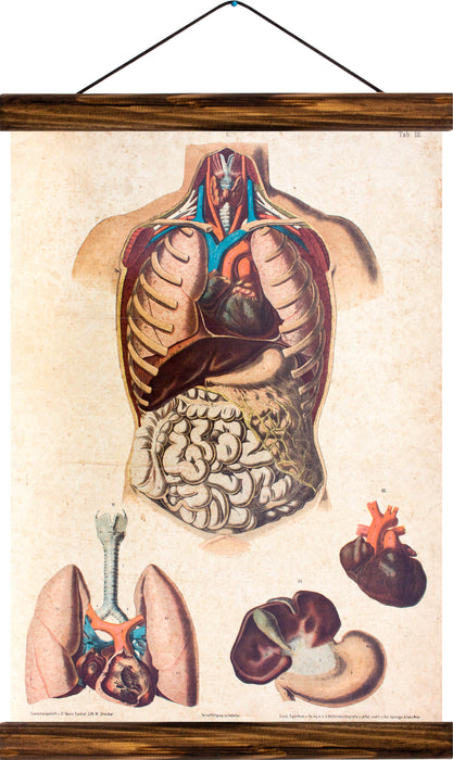 Human torso and inner organs, reprint on linen