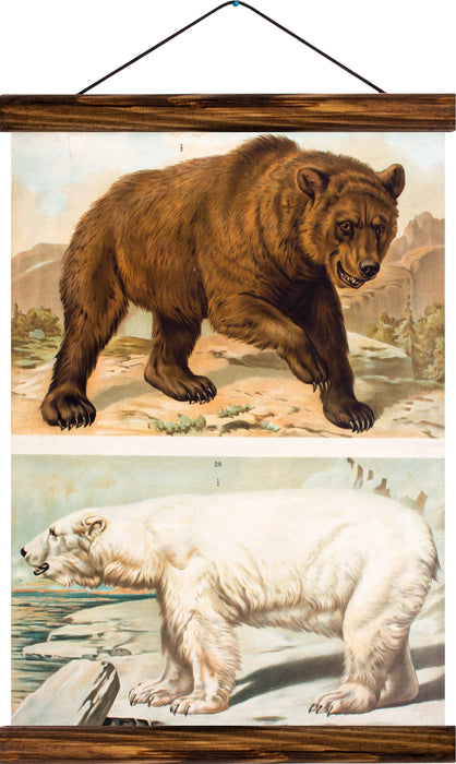 Brown and Ice Bear, reprint on linen