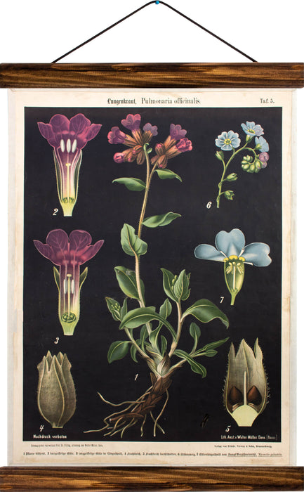 Pulmonaria (Lungenkraut), reprint on linen