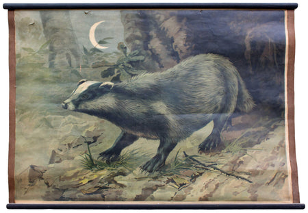 Dachs, badger, educational chart , 1905 - Josef und Josefine