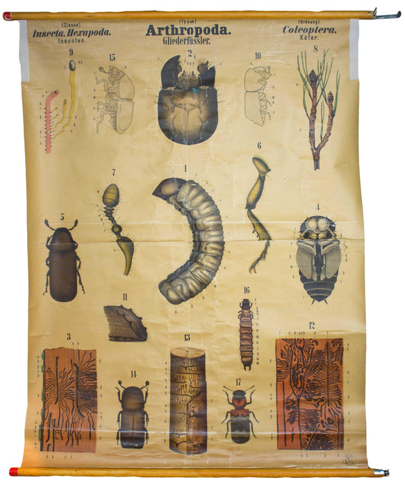Käfer, Arthropoda, Vintage 19th Century Wall Chart by Rudolf Leuckart, 1873 - Josef und Josefine
