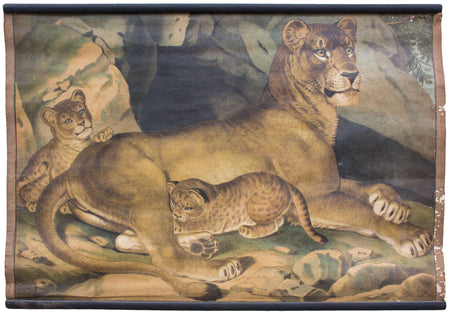 Lion, Löwin, educational chart , 1891 - Josef und Josefine