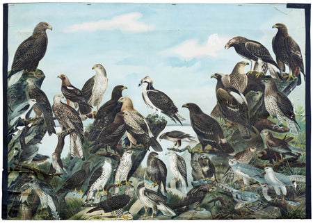 Birds of prey, 1910 - Josef und Josefine
