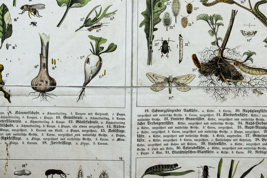Agriculturally Useful or Harmful Insects, Vintage Wall Chart, 1920 - Josef und Josefine