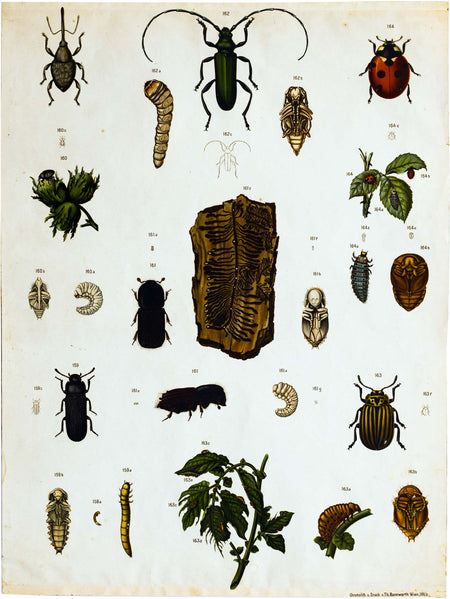 Vintage Zoological Wall Chart, 1912 - Josef und Josefine