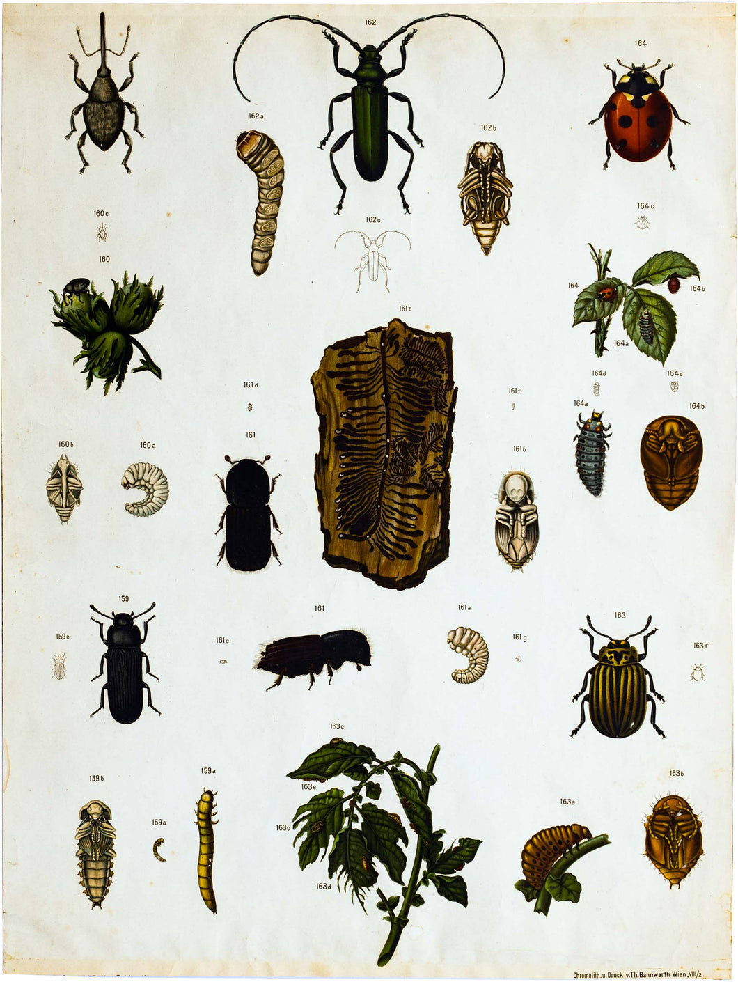 Vintage Zoological Wall Chart, 1912