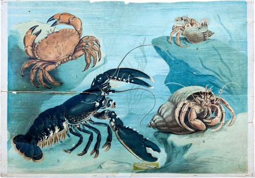 Crustaceans, Vintage Wall Chart, 1920