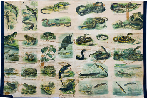 Reptiles and Amphibians, Vintage Wall Chart, 1910