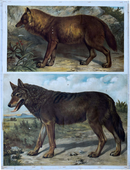 Fox and Wolf, Vintage Wall Chart, 1910 - Josef und Josefine