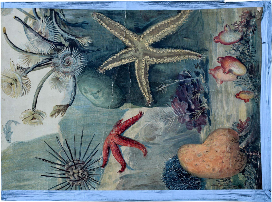 Deep Sea Animals, Vintage Wall Chart, 1880