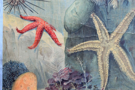 Deep Sea Animals, Vintage Wall Chart, 1880 - Josef und Josefine