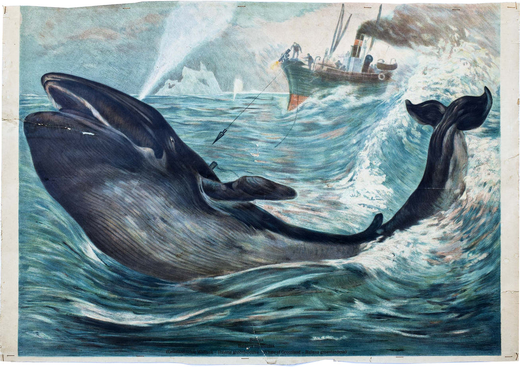 Whaling, Vintage Wall Chart, 1890
