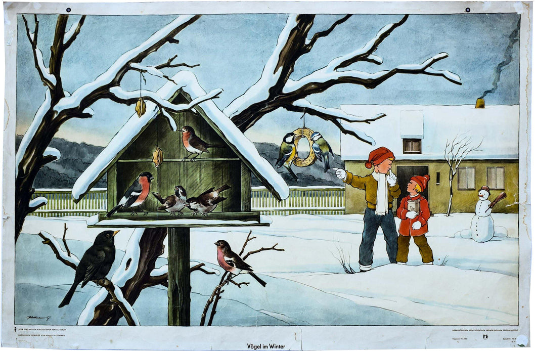 Birds in Winter, Vintage Wall Chart, 1960