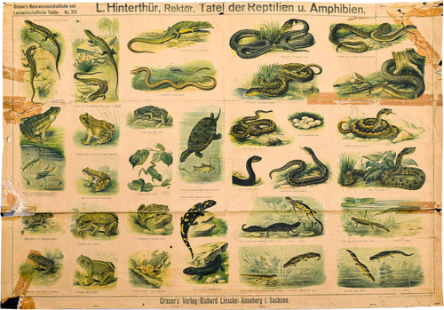 Reptiles and Amphibians, Vintage Wall Chart, 1890
