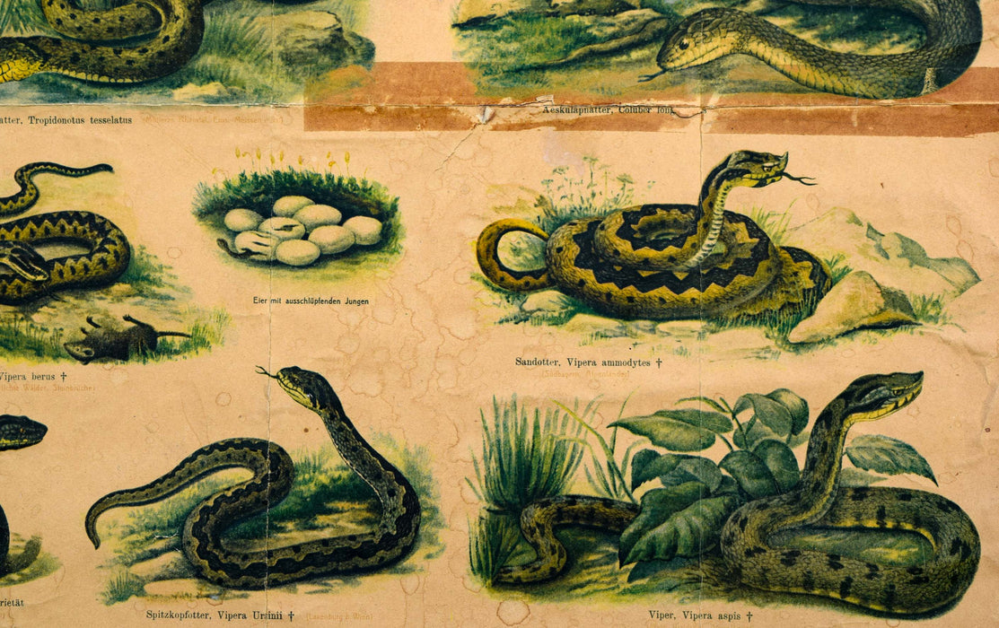 Reptiles and Amphibians, Vintage Wall Chart, 1890 - Josef und Josefine