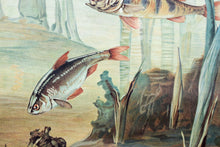 Fresh Water Fish, Vintage Wall Chart, 1950