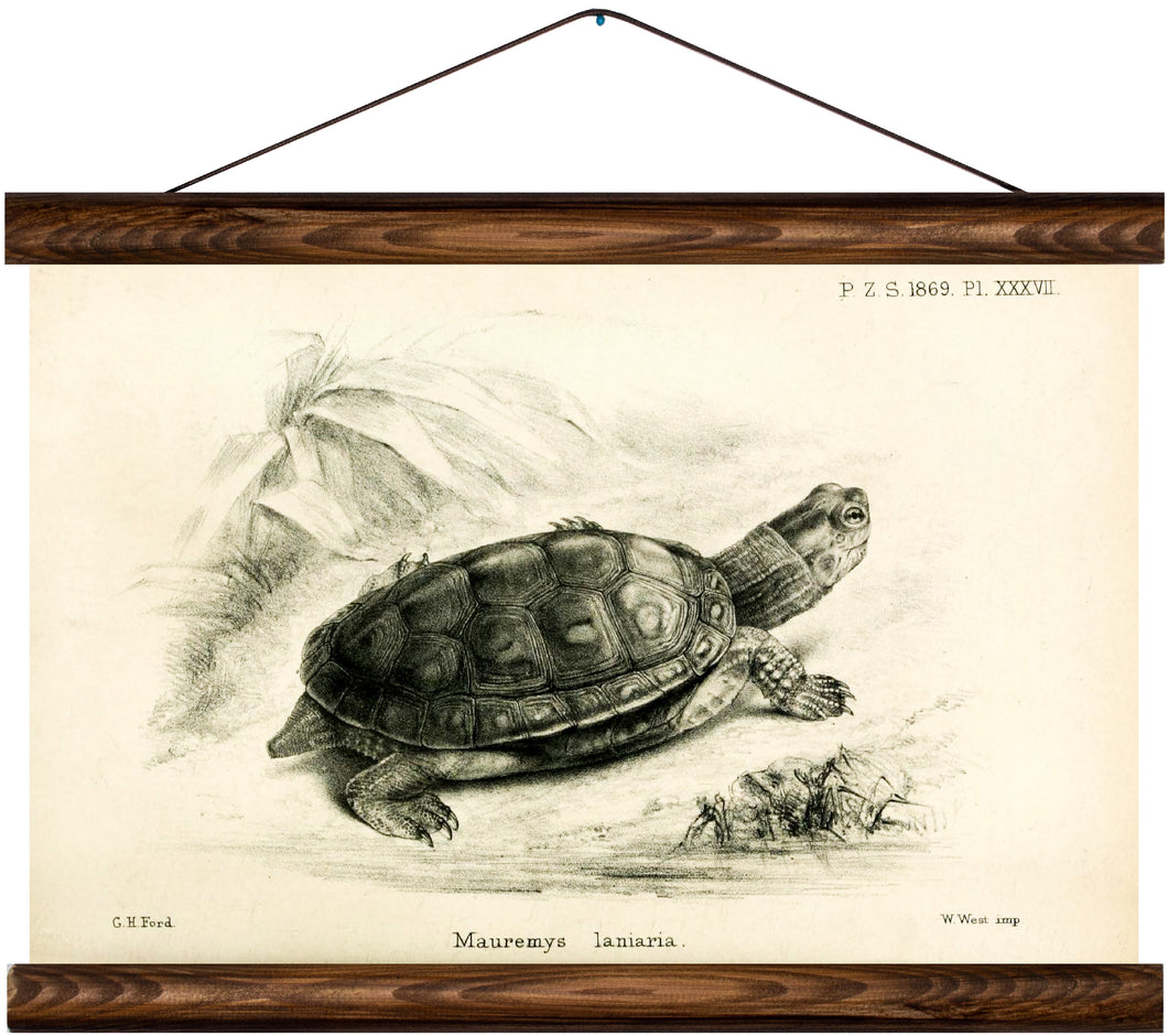 Turtle, reprint on linen