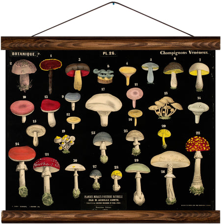 Different types of mushrooms, reprint on linen - Josef und Josefine