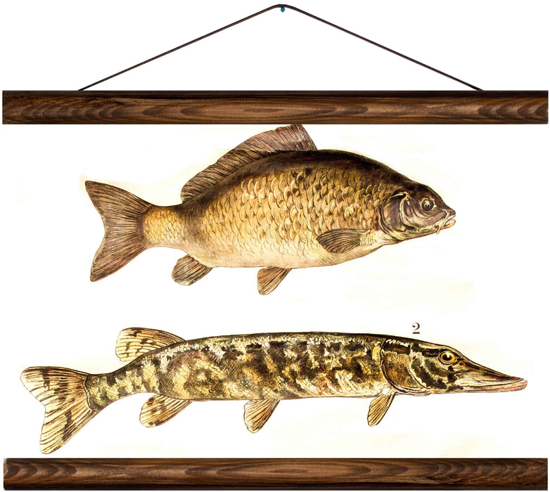 Carp and northern pike, reprint on linen - Josef und Josefine