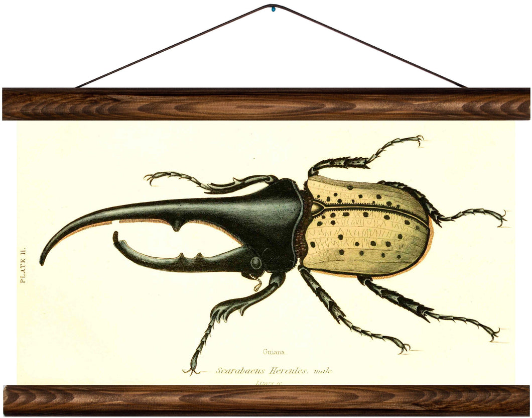 Hercules beetle, reprint on linen