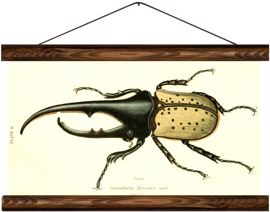 Hercules beetle, reprint on linen - Josef und Josefine