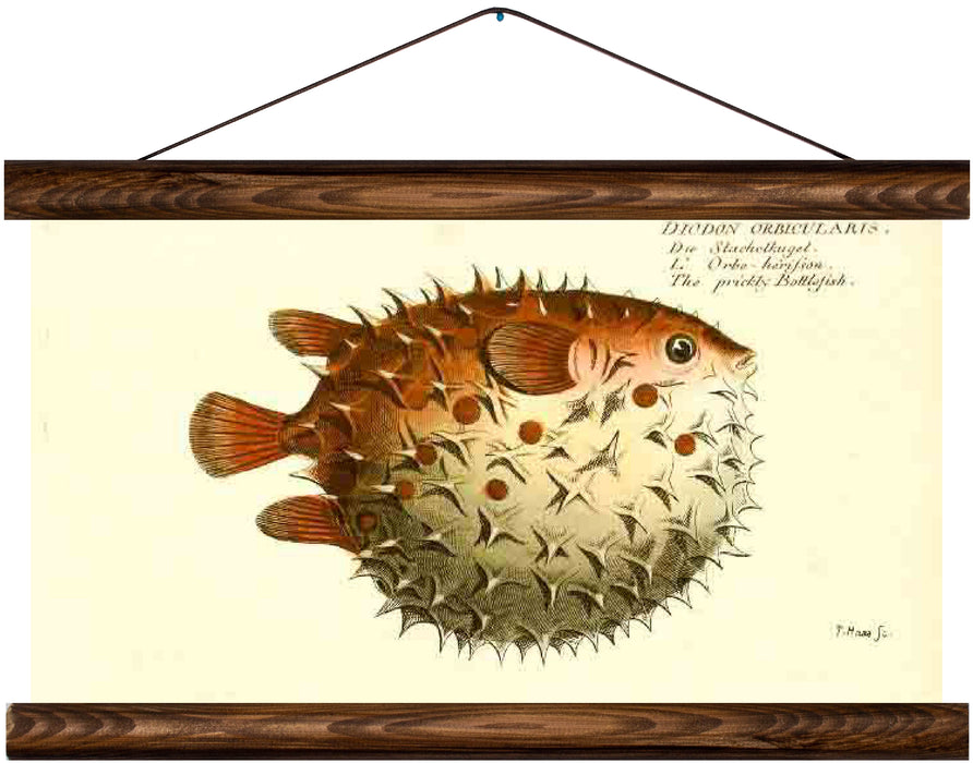 Pufferfish, reprint on linen - Josef und Josefine