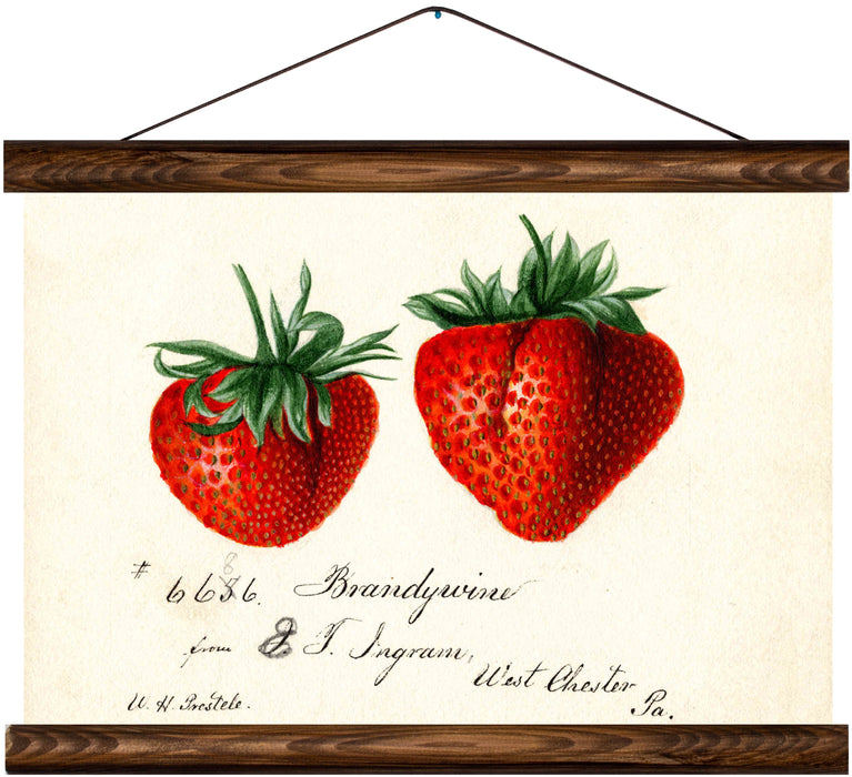 Strawberries, reprint on linen - Josef und Josefine
