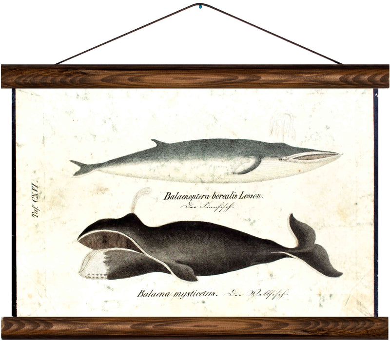 Whales, reprint on linen - Josef und Josefine
