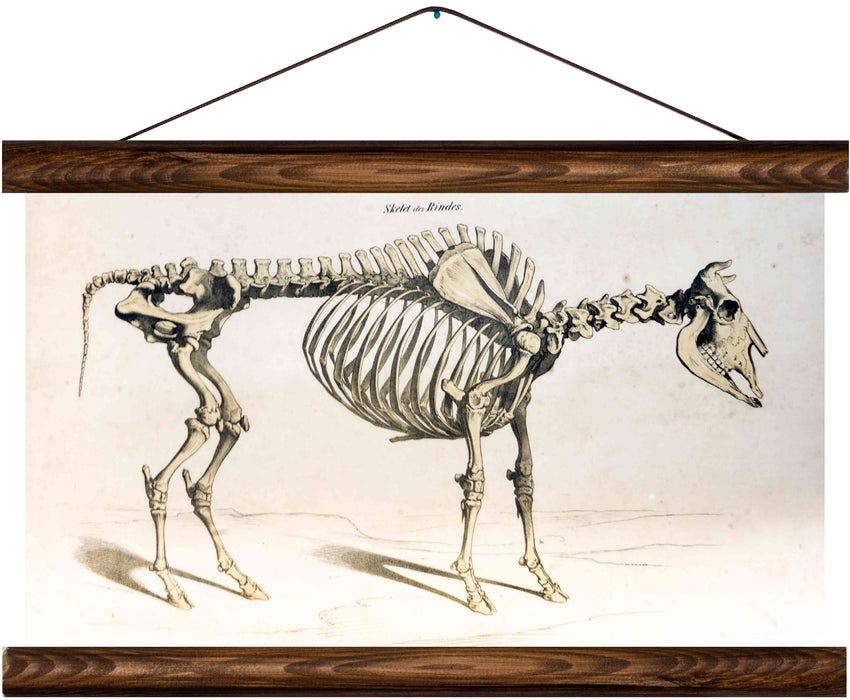 Skeleton of a cow, reprint on linen - Josef und Josefine