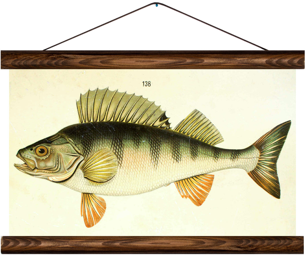 Perch, reprint on linen