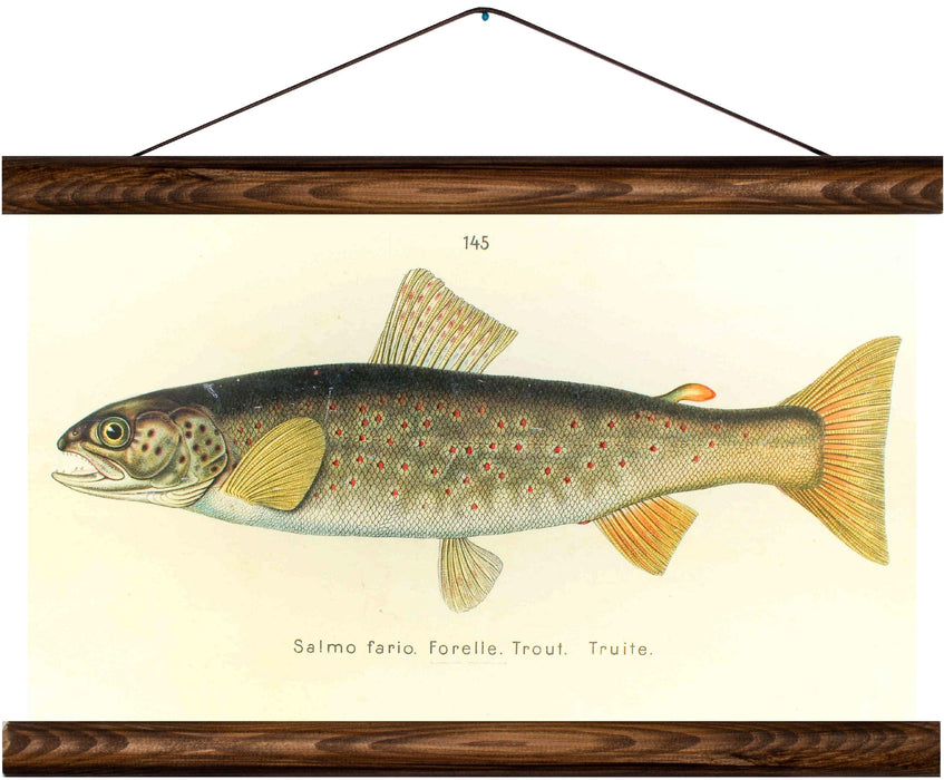 Brown trout, reprint on linen - Josef und Josefine