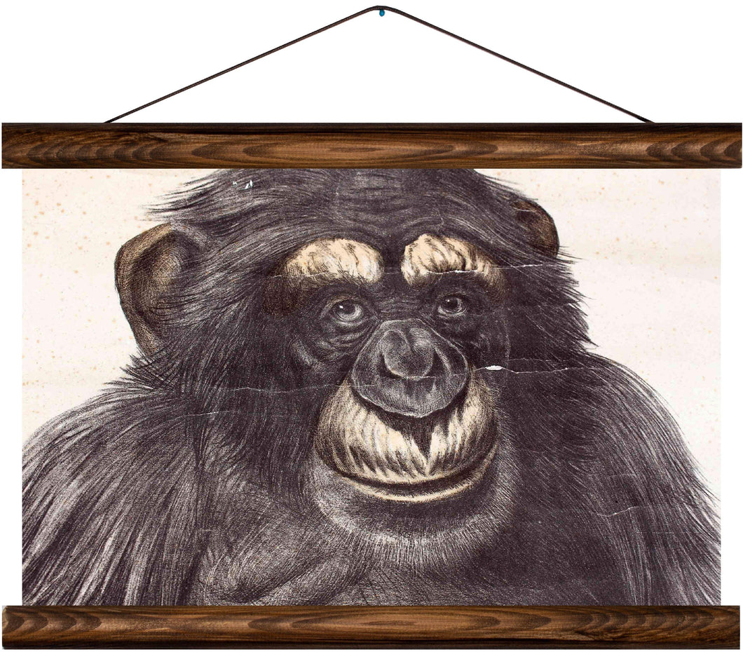 Chimpanzee, reprint on linen