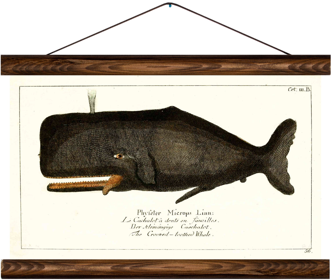 Whale, reprint on linen