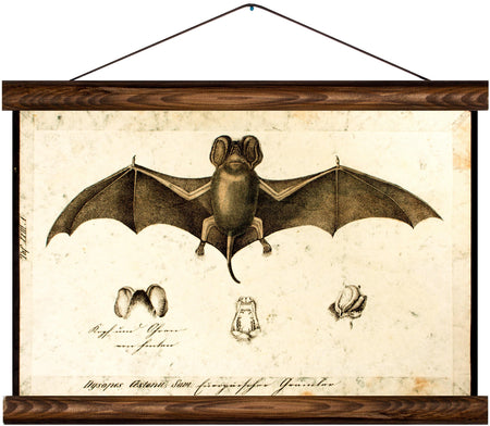 Bat, reprint on linen - Josef und Josefine