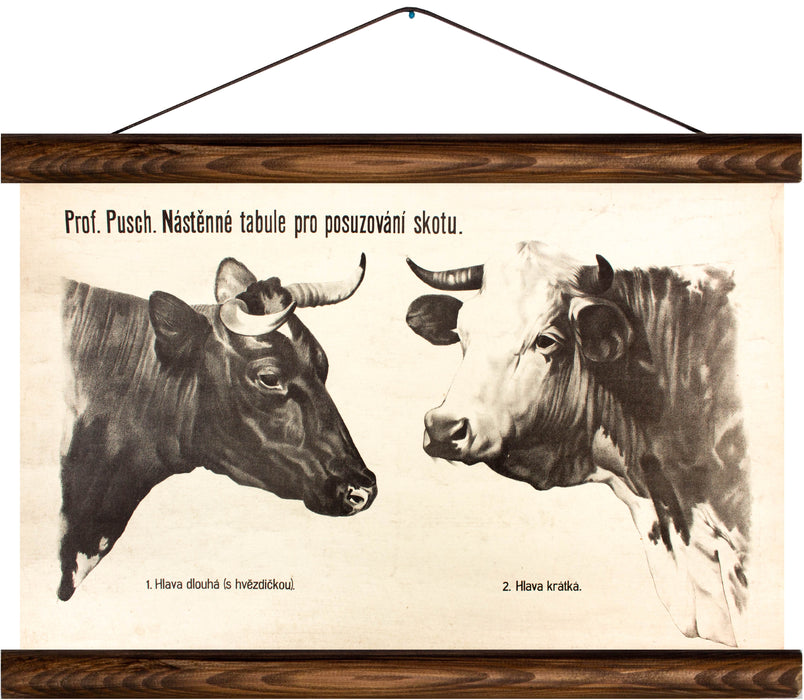 Cattle breeding, reprint on linen