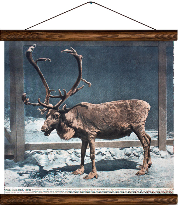 Reindeer, reprint on linen