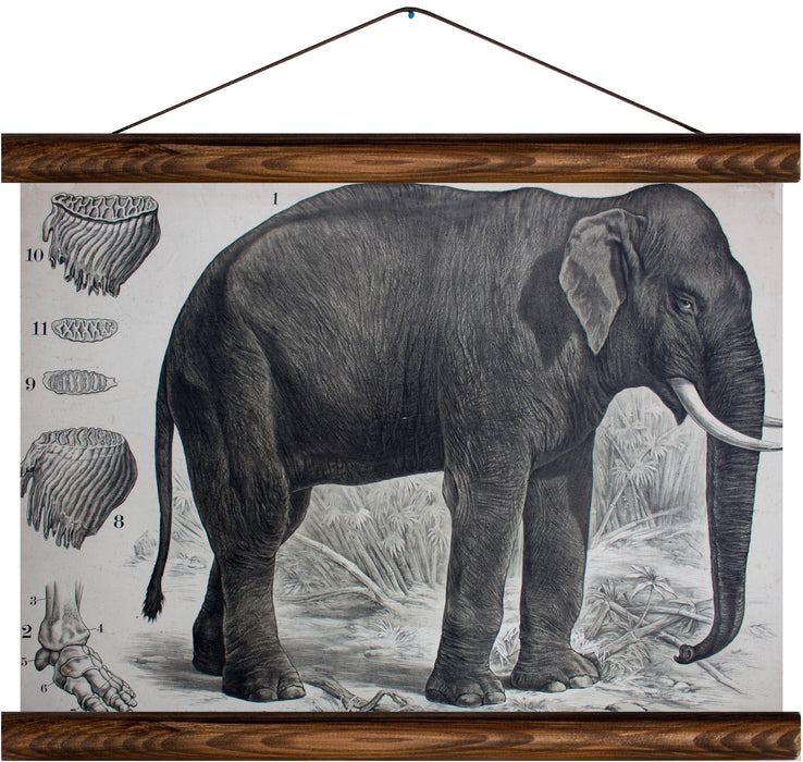 Elephant, reprint on linen