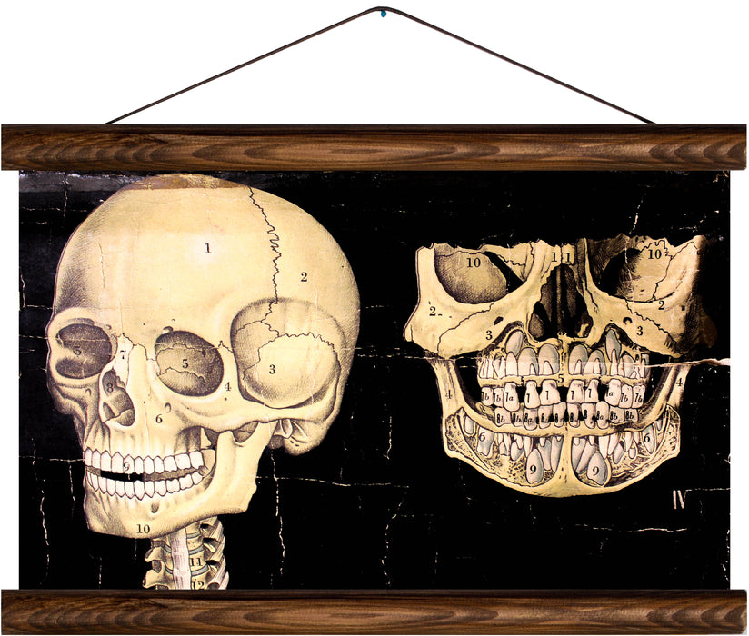 Human skull and jaw, reprint on linen