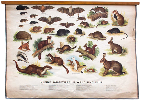 Säugetier im Wald, mammals in the wood, educational chart , 1953 - Josef und Josefine