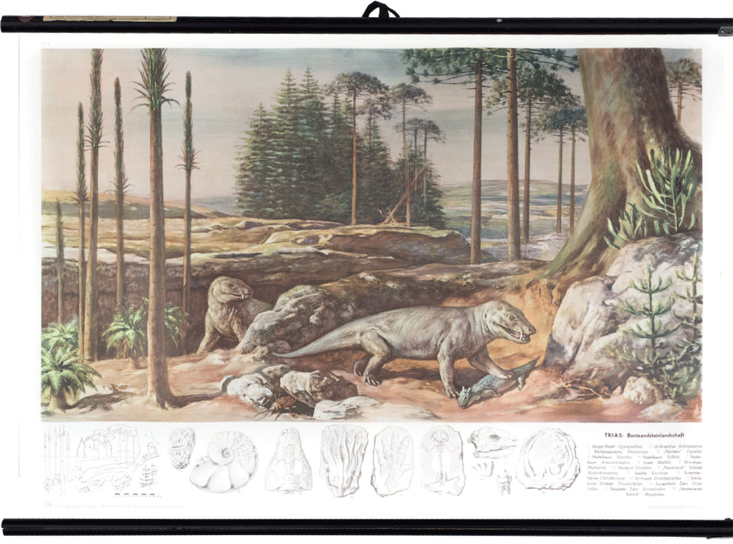 Triassic, colored sandstone landscape, 1950